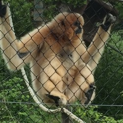 Poser #monkeyworld