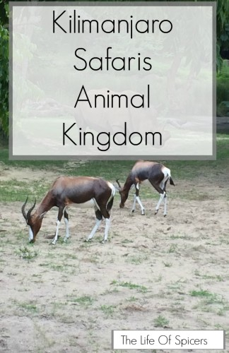 On Safari In Animal Kingdom