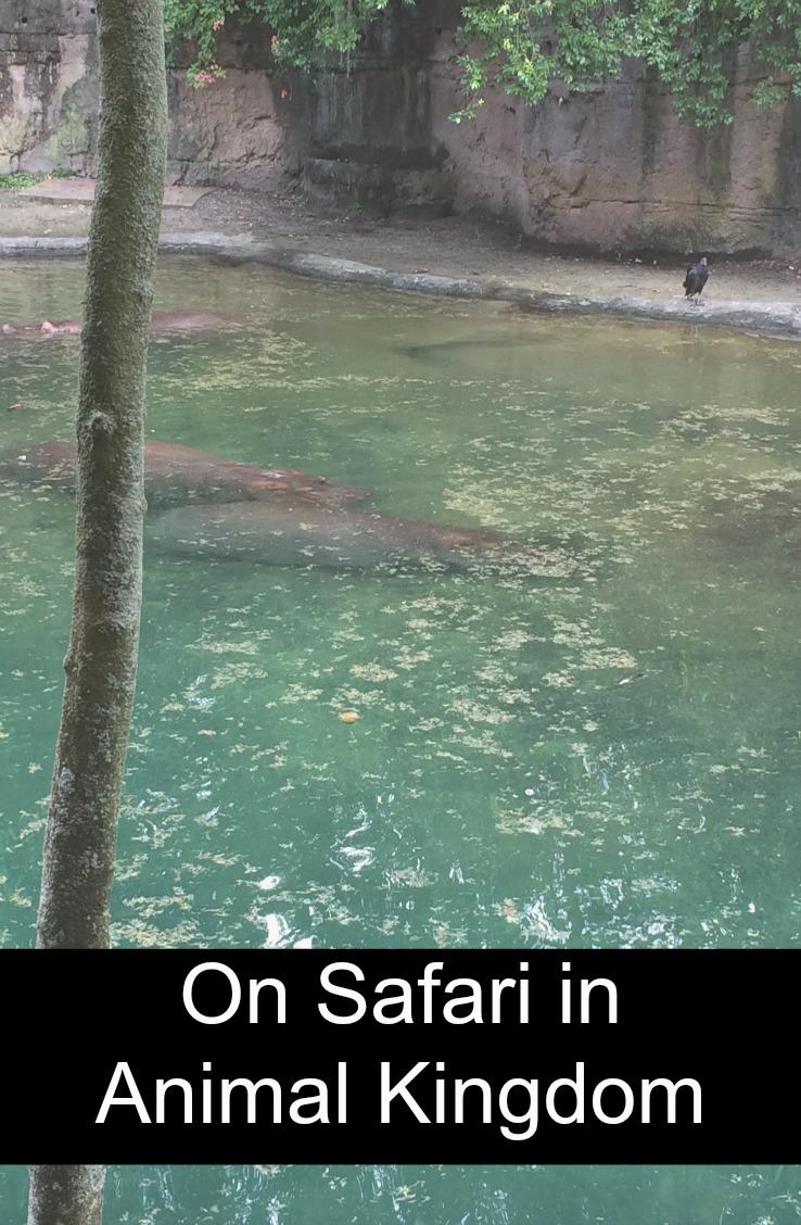 Kilamanjaro Safaris Animal Kingdom