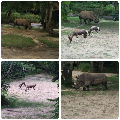 Kilamanjaro Safaris Animal Kingdom