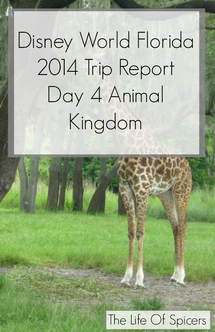 Disney World Florida 2014 Holiday Day 4 Animal Kingdom
