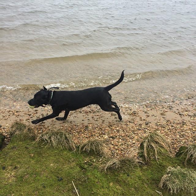 dog walks in dorset