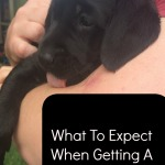 What To Expect When Getting A Puppy