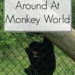 Monkeying Around At Monkey World