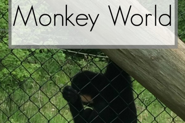 Monkeying Around At Monkey World