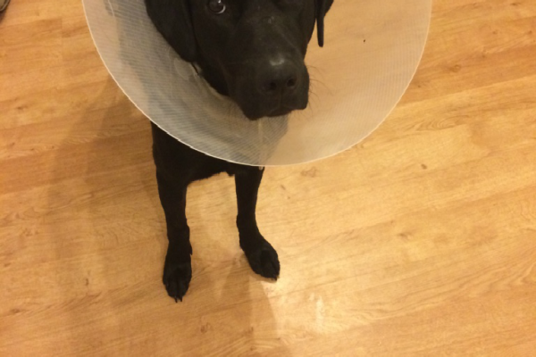What To Expect When You Have Your Puppy Spayed