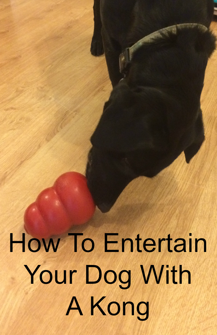 How To Entertain Your Dog With A Kong