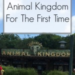 Tips For Visiting Animal Kingdom For The First Time