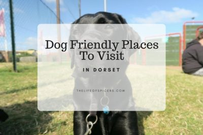 5 Dog Walks In Dorset