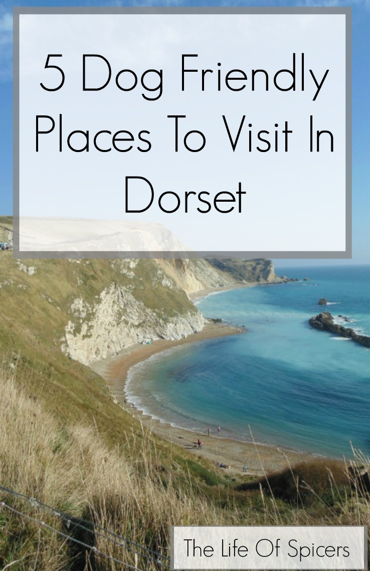 5 Dog Friendly Places To Visit In Dorset