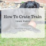 crate train your puppy