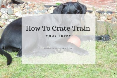 Top Tips For Crate Training A Puppy