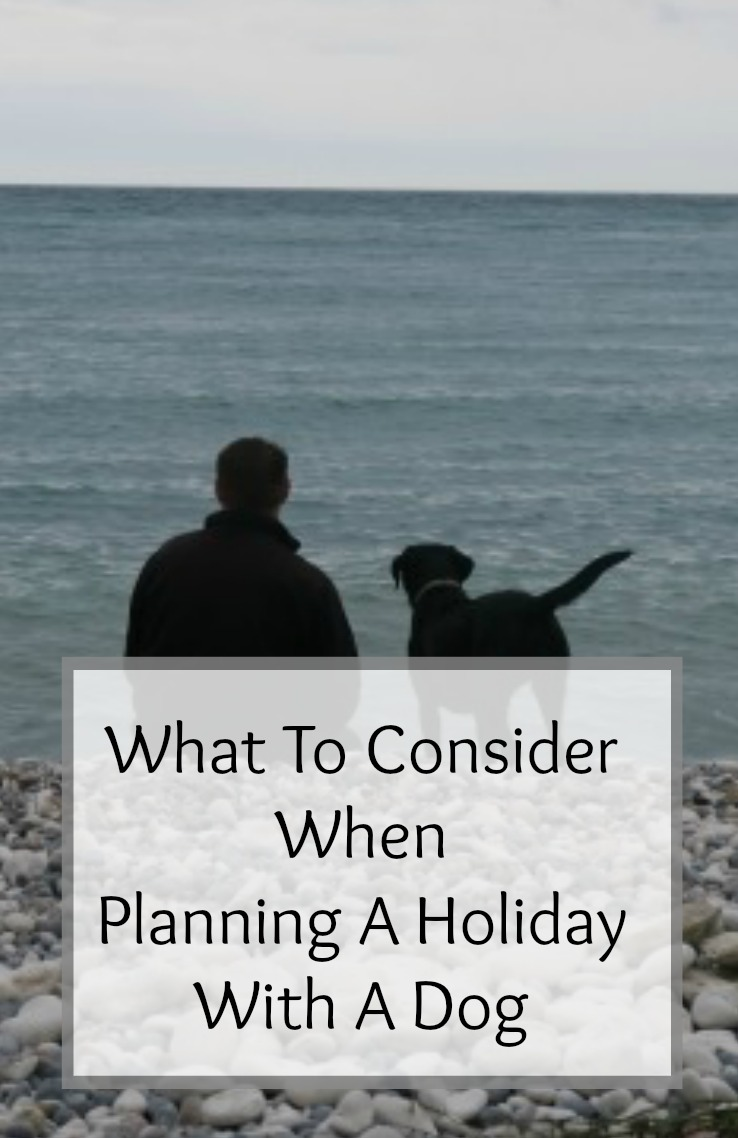 planning a holiday with a dog