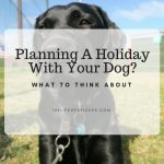 planning holidays with dogs