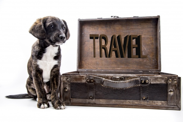 Taking Your Furry Friend on Your Next Holiday: Most Common Misconceptions