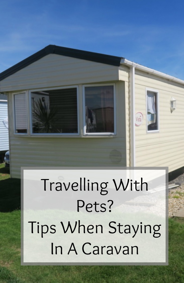 caravan holidays with dogs