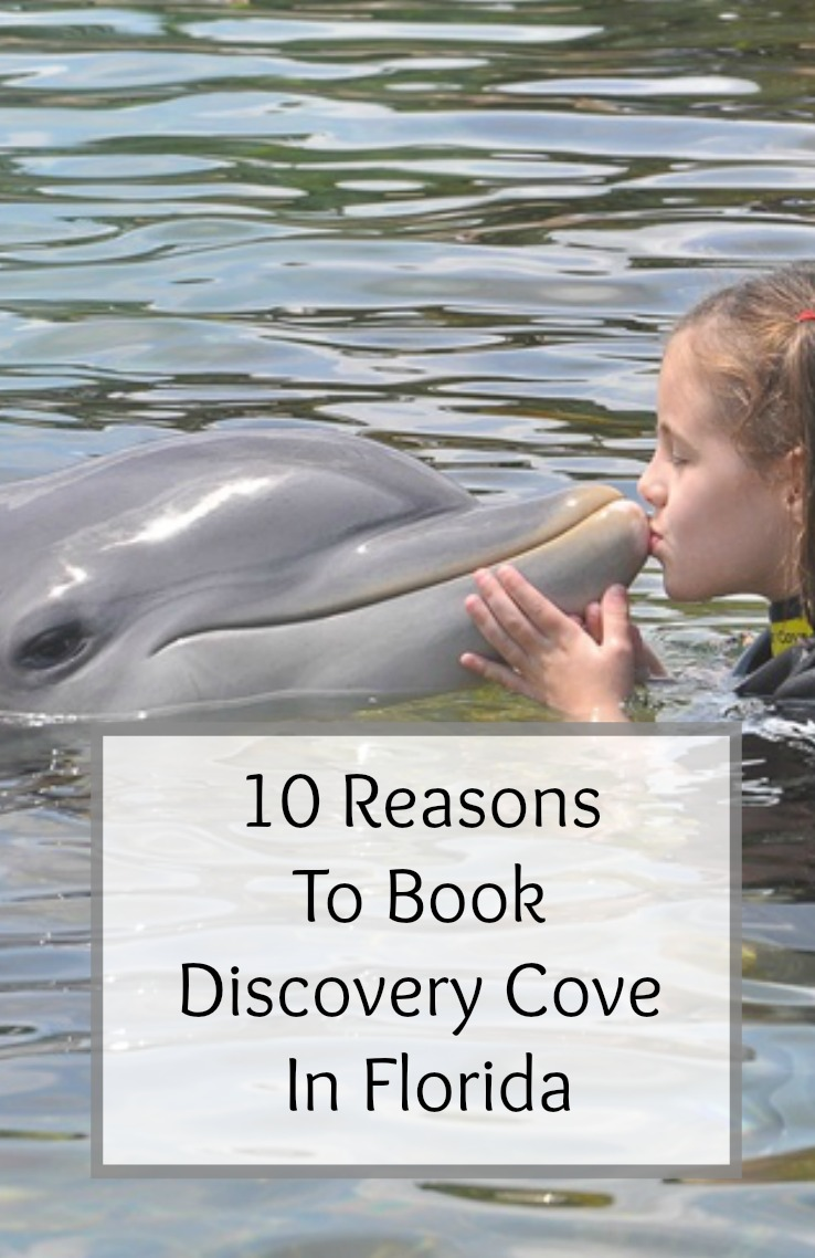 10 Reasons To Book Discovery Cove
