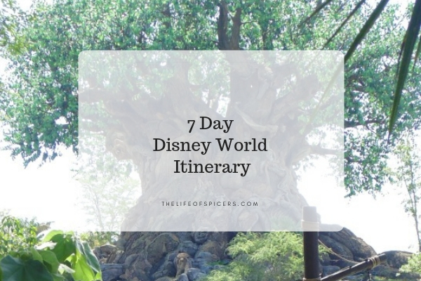 7 day disney world itinerary