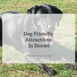 dog friendly attractions in Dorset