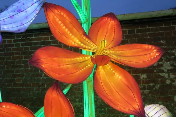 Longleat Festival Of Light flower