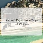 animal experience days