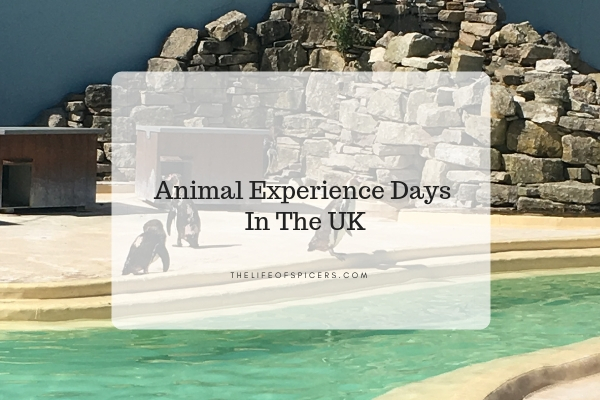 Top Animal Experience Days In The UK