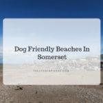 dog friendly beaches Somerset