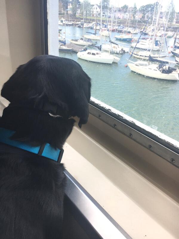pet friendly wightlink ferry crossing